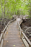 Boardwalk In Mangrove Forest Stock Images