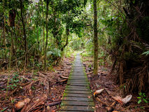 Boardwalk through the jungle in Bako National Park, Borneo, Malaysia Stock Images