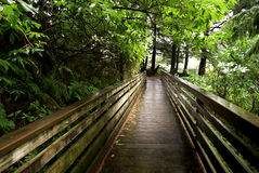 Boardwalk Through Ketchican  Forest Stock Photo