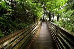 Boardwalk Through Ketchican  Forest. Wooden boardwalk, slick with rain, spanning ravine in Ketchican forest Stock Photo