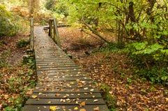 boardwalk krajobraz Zdjęcia Royalty Free