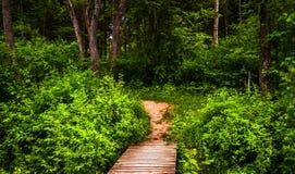 Boardwalk ślad i bujny wiosny las w Codorus stanu parku Obrazy Royalty Free
