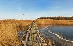 Boardwalk in a lake. Stock Photography