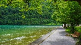 Boardwalk by a lake. Boardwalk by a green lake stock image
