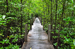 boardwalk lasu mangrowe Obrazy Stock