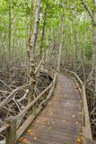 boardwalk lasu mangrowe Fotografia Royalty Free