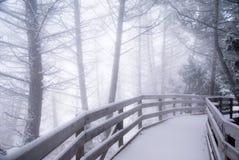 boardwalk lasu zima Zdjęcie Royalty Free