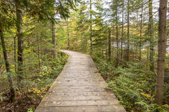 Boardwalk Leading Through a Coniferous Forest - Ontario, Canada. Boardwalk Leading Through a Coniferous Forest Next to a Lake in Autumn - Algonquin Provincial stock images