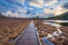 Boardwalk Leading To Forest Alongside Lake Royalty Free Stock Images