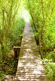 Boardwalk into the light Royalty Free Stock Photo