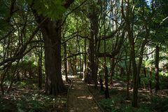 Forest walk in Lilly Pilly Gully. The boardwalk in the Lilly Pilly Gully forest walk, provides easy access for everyone to enjoy one of the many the natural royalty free stock photo