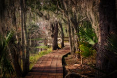 Boardwalk through a Louisiana Swamp Stock Photo