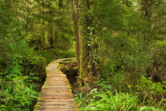 Boardwalk through lush rainforest, Pacific Rim NP, Canada Stock Photo