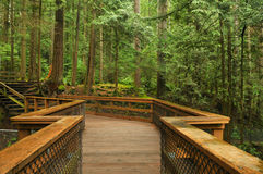 Boardwalk in lynn valley forest Stock Photography