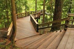 Boardwalk in lynn valley forest Royalty Free Stock Image