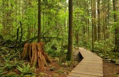 Boardwalk in lynn valley forest Royalty Free Stock Photo