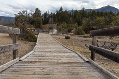Boardwalk at Mammoth Hot Springs. Looking down a boardwalk at Mammoth Hot Springs Royalty Free Stock Images
