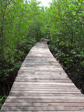 Boardwalk in mangrove forest. Boardwalk surrounded by mangrove plant in mangrove forest Royalty Free Stock Photos