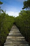Boardwalk into mangrove forest Stock Photos