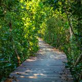 Boardwalk through the mangrove forest Stock Photography
