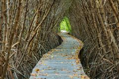Boardwalk through the mangrove forest Stock Photos