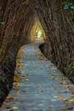 Boardwalk through the mangrove forest Royalty Free Stock Photography