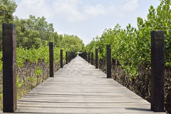 Boardwalk in mangroves field, Rayong, Thailand. Royalty Free Stock Photo