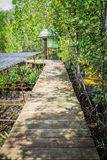 Boardwalk through the mangroves Stock Photography