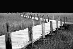 Boardwalk through the marsh. royalty free stock images