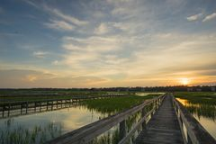 Boardwalk and marsh Stock Images