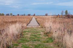 Boardwalk Through Meadow at Necedah. Boardwalk through prairie and sedge meadow along boghaunter trail of necedah national wildlife refuge in juneau county Royalty Free Stock Photography