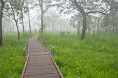Boardwalk in mistry forest Stock Images