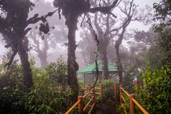 Boardwalk through misty Mossy Forest in Cameron Highlands. A wooden boardwalk leads through the Mossy Forest in Cameron Highlands in Malaysia. The forest is Stock Photos