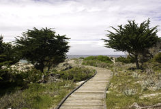 Boardwalk between Monterey cypress trees Royalty Free Stock Photo