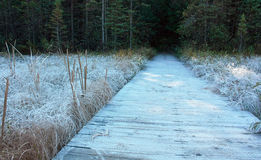 Boardwalk Morning frost royalty free stock photography