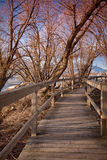 Boardwalk through Natural Area. A wooden plank boardwalk in the middle of a natural outdoor habitat area Stock Photo