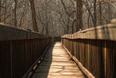 Boardwalk through nature Stock Image