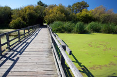 Boardwalk in a nature sanctuary Stock Image