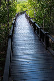 Boardwalk for nature trail in mangrove forest Stock Image