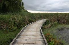 Boardwalk over marsh Stock Photo