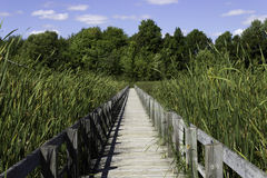 Boardwalk over the marsh Royalty Free Stock Photo