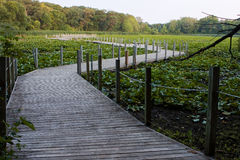 Boardwalk over a Swamp Royalty Free Stock Image