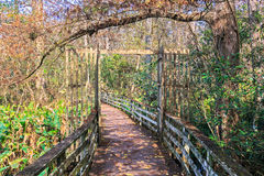 Boardwalk over the swamp, Florida Stock Photos