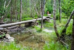 Boardwalk Over Swampy Trail. Boardwalk for trail going over swampy bog in alaska wilderness with a bridge in the background Stock Photo