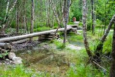 Boardwalk Over Swampy Trail Stock Photo