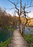 Boardwalk over turquoise lake. In Plitvice national park, Croatia. Spring time Royalty Free Stock Image