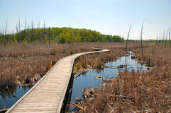 Boardwalk over wetlands. Valens.  Ontario.  Canada Royalty Free Stock Images