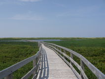 Boardwalk over Wetlands. A wooden boardwalk passes over wetlands near sand dunes in Greenwich National Park in Prince Edward Island, Canada Royalty Free Stock Images