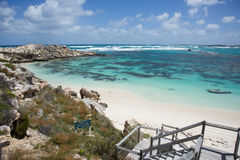 Boardwalk overlooking Rottnest Reef. View from boardwalk overlooking the turquoise Indian Ocean seascape with limestone rock, dunes, and coral reef on a sunny Royalty Free Stock Photos