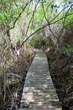 Boardwalk part of Mastic Trail, Grand Cayman Island Stock Image